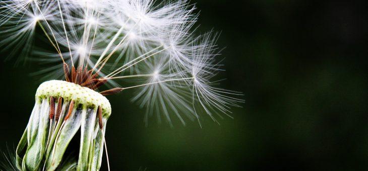 Najczęściej występujące rodzaje alergii